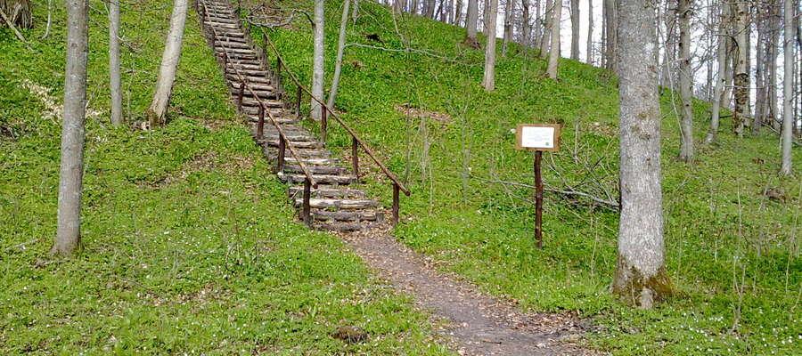 Górę Zamkową na stokach otacza ją bujny liściasty las. Razem tworzy to urokliwy zakątek przyrodniczy warty odwiedzenia