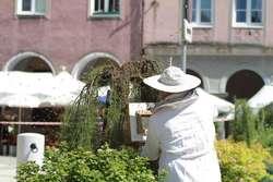 Greenpeace: Chemizacja rolnictwa szkodzi pszczołom