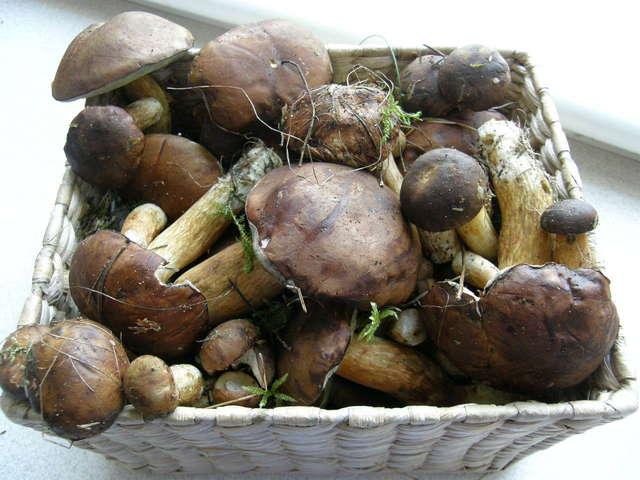 Wielbark: Raj dla grzybiarzy - full image