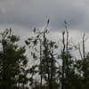 Warmińskie i mazurskie wyspy kormoranów