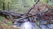 Rezerwat Przyrody Las Warmiński