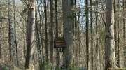 Las Tylicki: Trzy Dęby z kapliczką