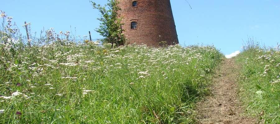 Chętni mogą zwiedzić m. in. holenderski wiatrak w Łąkorzu