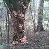 Grzybowe drzewo