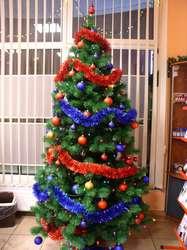 Kup sobie świąteczne drzewko