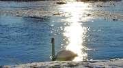 Krutynia: królowa mazurskich rzek w zimowej szacie