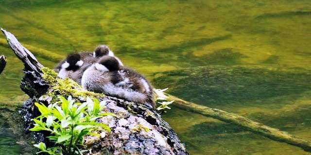 Krutynia: spływ kajakiem po królowej mazurskich rzek - full image