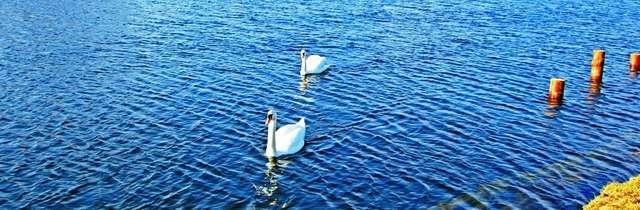 Wiosna nad jeziorem Roś - full image