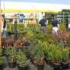 Zrób porządek na grządkach, czyli pierwsze wiosenne prace w ogrodzie i na działce