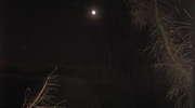Wszedł na drzewo i krzyczał do księżyca. Trafił do celi