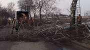 Utrudnienia w ruchu z powodu wycinki drzew