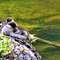 Krutynia: spływ kajakiem po królowej mazurskich rzek