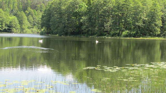 Jezioro Podkówka (Siginek, Kopytko) w Olsztynie - full image