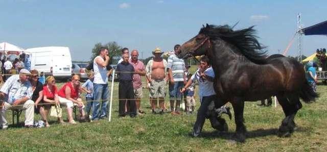 Najdroższe konie arabskie w Janowie Podlaskim - full image