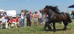 Najdroższe konie arabskie w Janowie Podlaskim