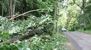 Powiało w całym województwie. Powalone drzewa, brak prądu