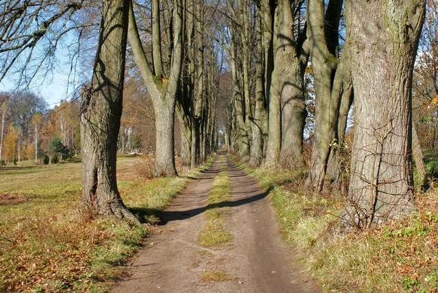 Lamkowo: wieś starsza niż Olsztyn - full image