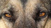 Będą surowe kary za niedopilnowanie niebezpiecznych psów