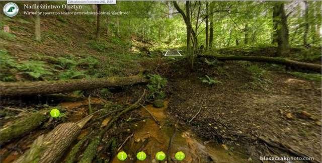 Wirtualny spacer po leśnictwie Zazdrość - full image