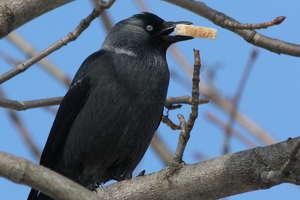 Czy zimą dokarmiać ptaki w miastach?