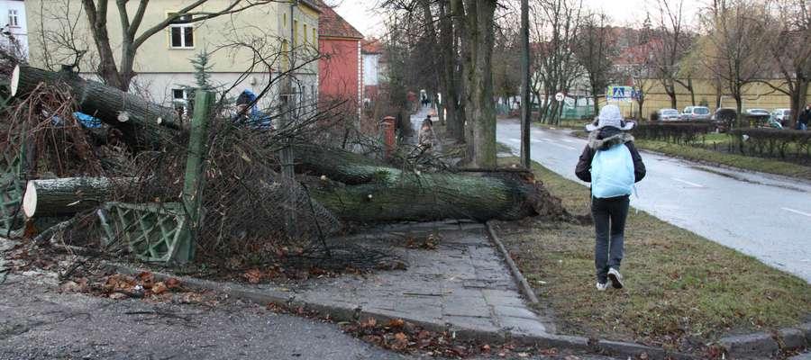 Drzewo powalone przez wiatr uszkodziło płoty na ulicy Daszyńskiego w Giżycku