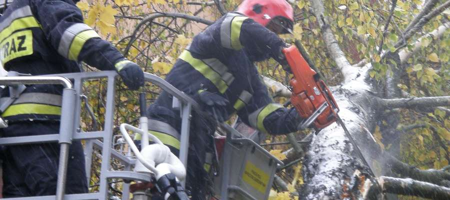 Powalone drzewa, zalane piwnice i zerwane linie energetyczne - trwa usuwanie szkód po niedzielnej nawałnicy.