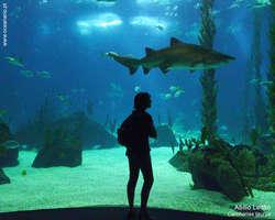 Oceanarium w Lizbonie odwiedza rocznie blisko milion turystów
