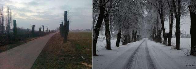 Ekologiczny dramat pod Działdowem. Zniszczyli drzewa - full image