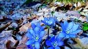 Wiosna przyszła nad Bełdany