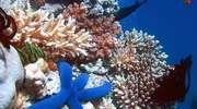 Powstaje największy na świecie morski rezerwat przyrody