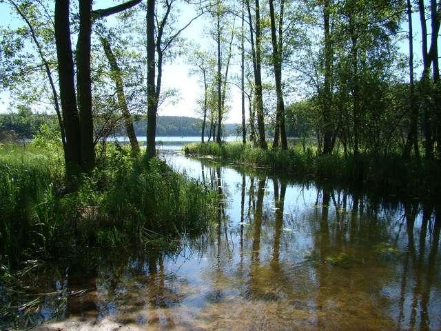 Z jeziora Zbiczno wypływa rzeczka Cichówka - full image