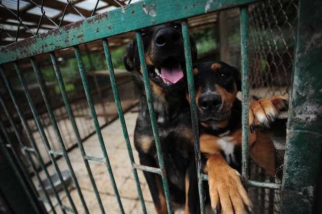 Zgodnie z nowym cennikiem za wzięcie ze schroniska psa lub kota będzie trzeba więcej zapłacić - full image
