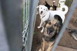 Zbiórka karmy i koców dla psów