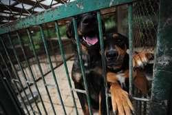 Zgodnie z nowym cennikiem za wzięcie ze schroniska psa lub kota będzie trzeba więcej zapłacić