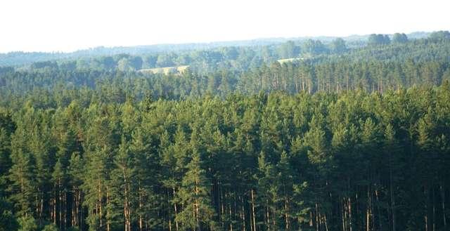 Rezerwat leży w częściowo wciąż dzikiej Puszczy Rominckiej - full image