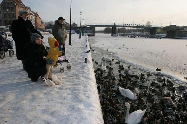 O zimowe dokarmianie kaczek i łabędzi w tym roku zadbało miasto - full image