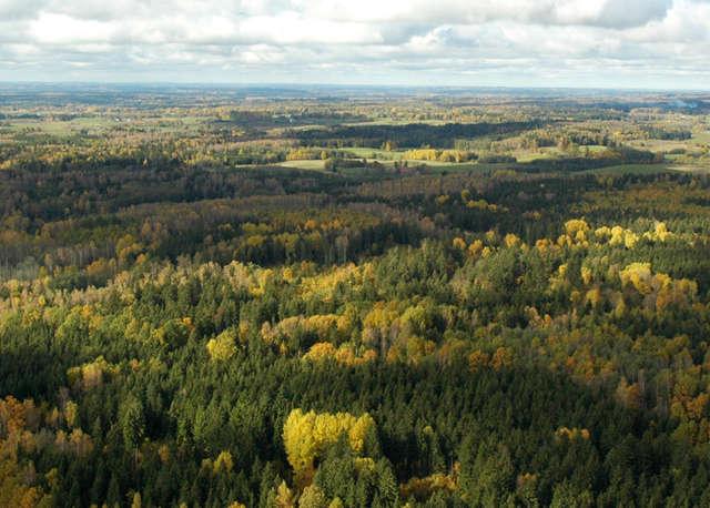 Rezerwat zajmuje nieco ponad 10 hektarów, prawie w całości porośniętych lasem - full image