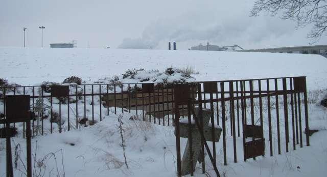 Wielbark (Willenberg) : resztki cmentarza ewangelickiego - full image