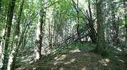 Rezerwat przyrody Cisowy Jar