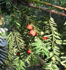 Rezerwat zajmuje nieco ponad 10 hektarów, prawie w całości porośniętych lasem