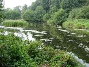 Rezerwat Borki większy o 200 hektarów