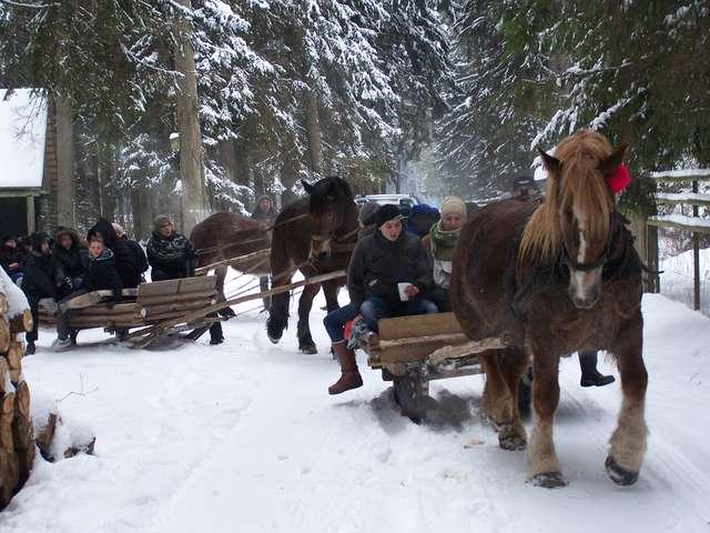 Leśny kulig gimnazjalistów z Kijewa - full image