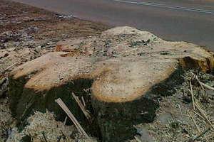 Jaki wpływ na zdrowie ma masowa wycinka drzew?