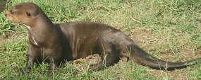 Rezerwat przyrody Bajory