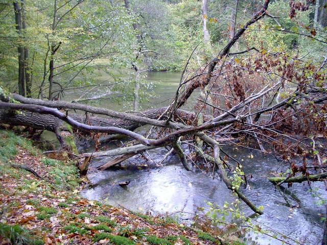 Łyna w Lesie Warmińskim w okolicach Rusi - full image