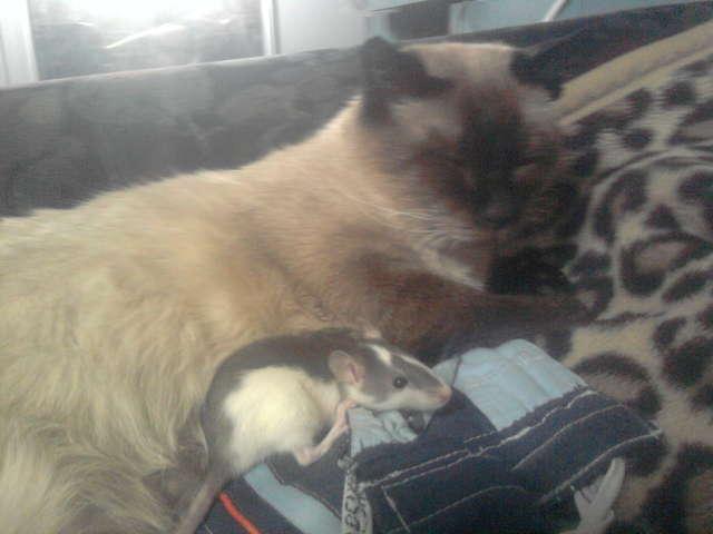 Apel internauty! Pomóżmy babci znaleźć zaginionego kota - full image