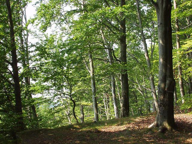 Rezerwat Przyrody Kadyński Las  - full image