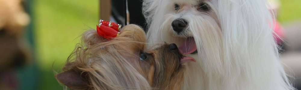 Rasowe psy całego świata wkrótce opanują stadion