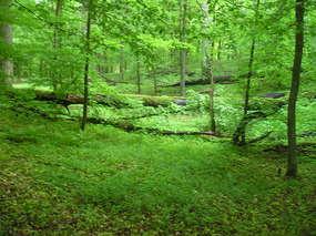 Rezerwat przyrody Jar Brynicy