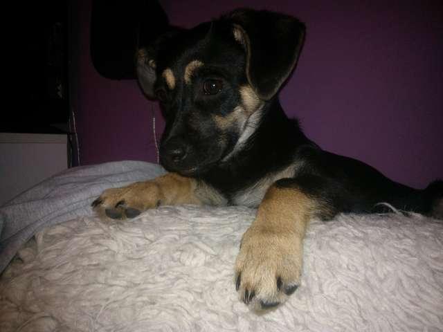 Znaleziono psa przy ulicy Tuwima w Olsztynie - full image
